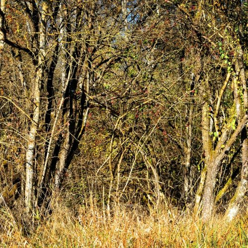 Wald Dickicht